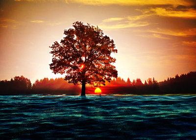Sunset 50x70 cm
